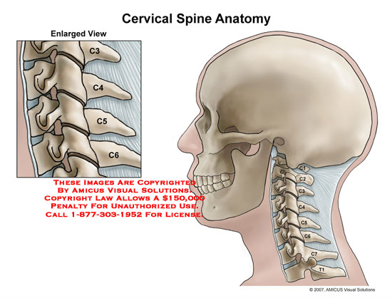 cervical – Page 2 – Anatomy Exhibits