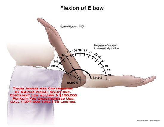 Flexion in anatomy
