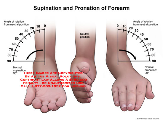 11112_07c) supination and pronation of forearm – anatomy exhibits, Human Body